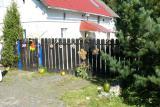 Galeria Dożynki 2008 - Goszczowice - Posesje