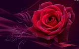 roza-kwiat-grafika.jpeg