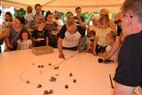 Galeria Wyścigi Ślimaków Winniczków